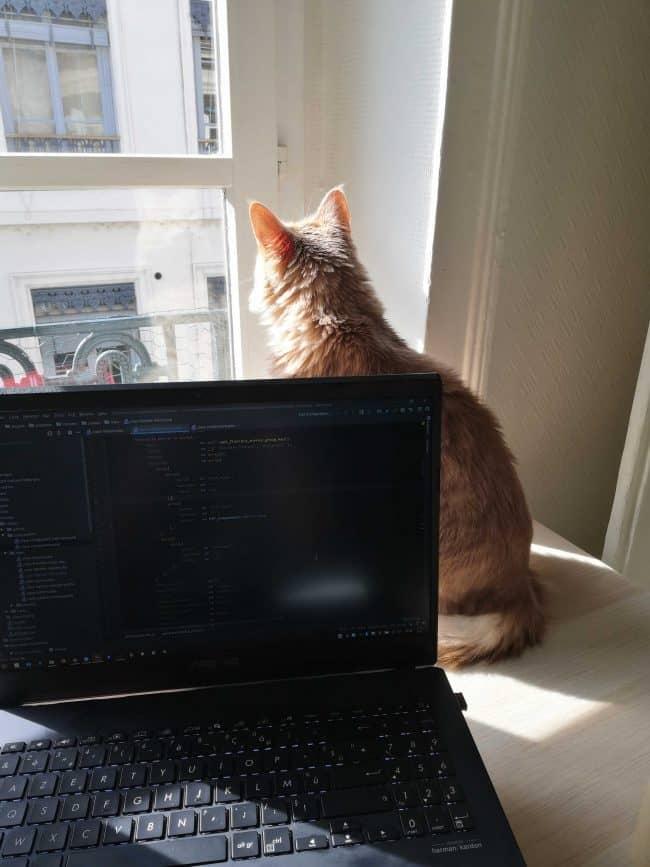 Espace de travail du chat de Maëlys